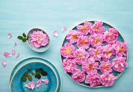Rosa damascena: proprietà, modalità d'uso e controindicazioni